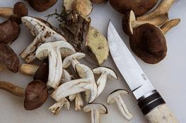 Pilzmesser mit geputzten Pilzen auf einem Tisch